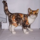 Winstanley Cat Multi Tabby and White Walking Size 5