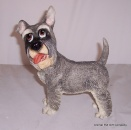Pets with Personality Colin the Schnauzer