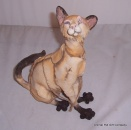 A Breed Apart Naala Siamese Cat